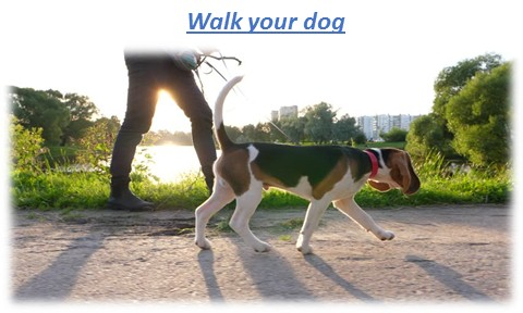 Walk your dog